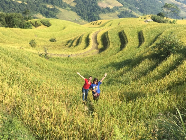 Rice Harvest season in Ha Giang